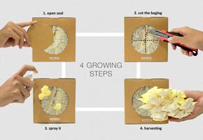Growbox Mushroom